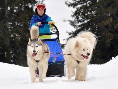 © DAG | Husky Spirit – Schlittenhundefahrten in Gosau