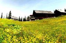 © Kraft | Almabtrieb von der Plankensteinalm in Gosau