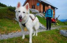 © t Dogtrekking & more Sportunion | Dogtrekking in Hallstatt – Naturerlebnisse mit Hund