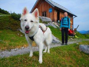 © t Dogtrekking & more Sportunion   Dogtrekking in Hallstatt – Naturerlebnisse mit Hund