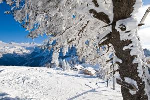 © OÖ.Tourismus/Erber |  Winterwandern in Gosau bei einem Urlaub im Schnee in der Skiregion Dachstein West im Salzkammergut