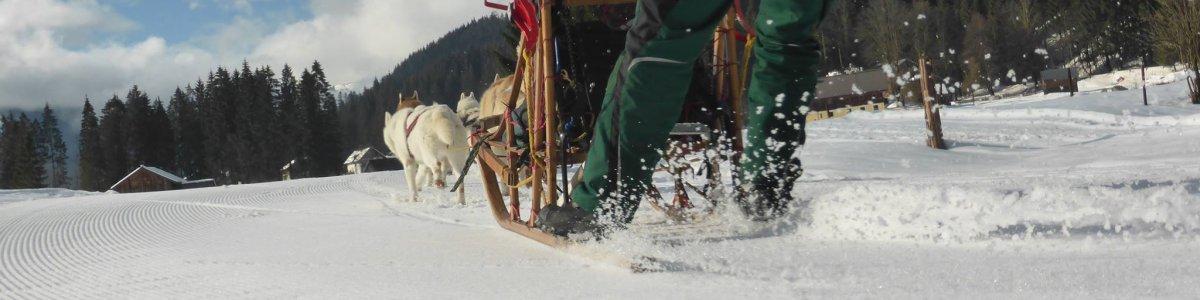 Husky Spirit – Schlittenhundefahrten in Gosau -