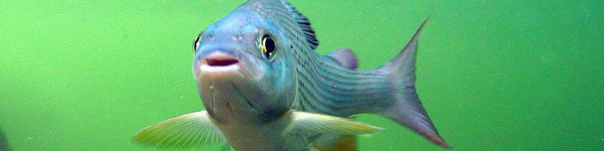 Unique fish world and sunken treasure - © Zauner
