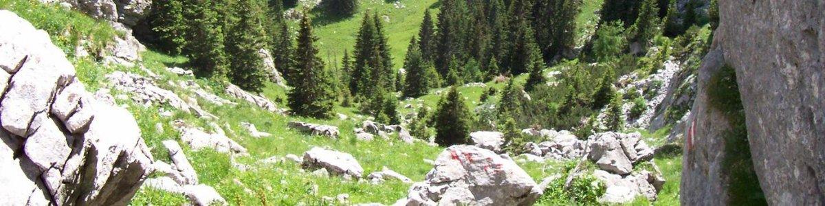 Radltal - Zwischen Hallstatt und Gosau -