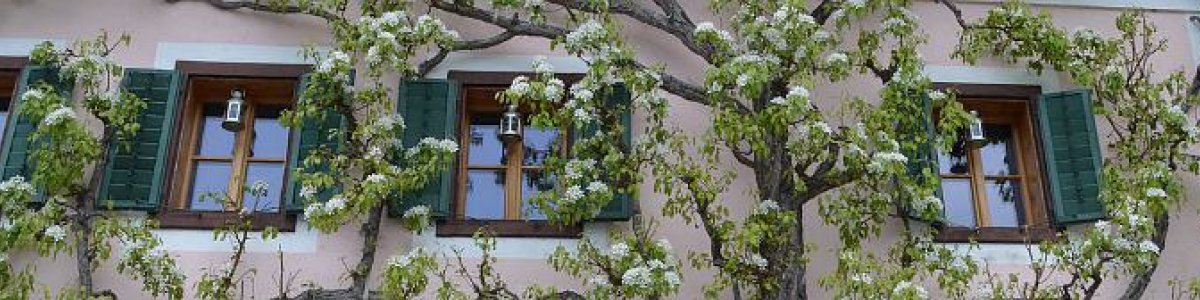 Urlaub in Hallstatt: Apartment Luise  -