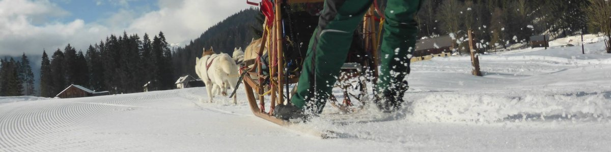 Husky Spirit – Sledge dog rides in Gosau -